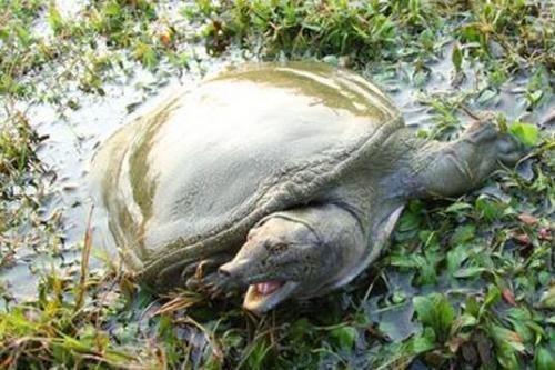 龟仿野生饲养需要哪些条件
